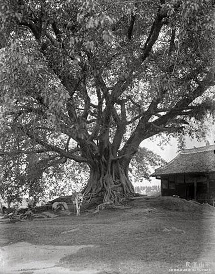 百年前的达州渠县照片
